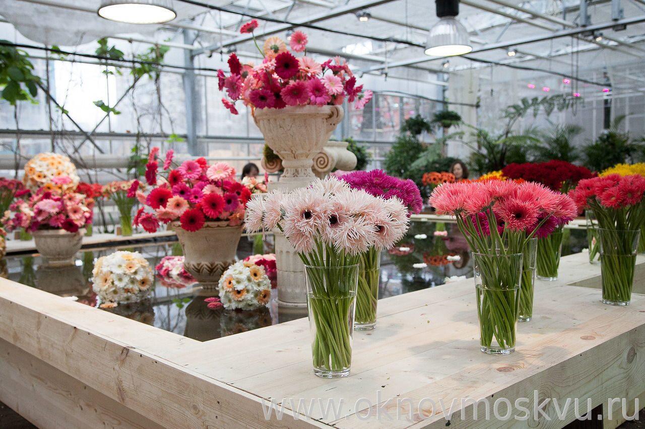 Цветы в губкине фото