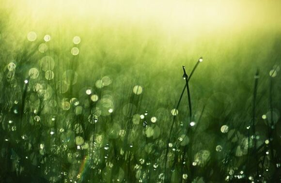 morning-dew-25-stunning-examples-of-morning-dew-photography